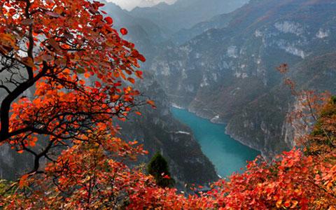 云台山红叶