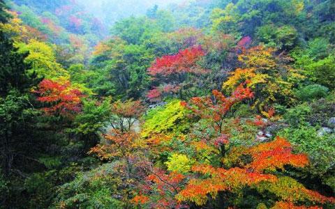 青天河红叶